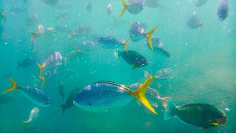 Great-Barrier-Reef_Lumia 950