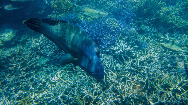 National Geographic Membawa Lumia 950 dan 950 XL Menjelajah The Great Barier Reef