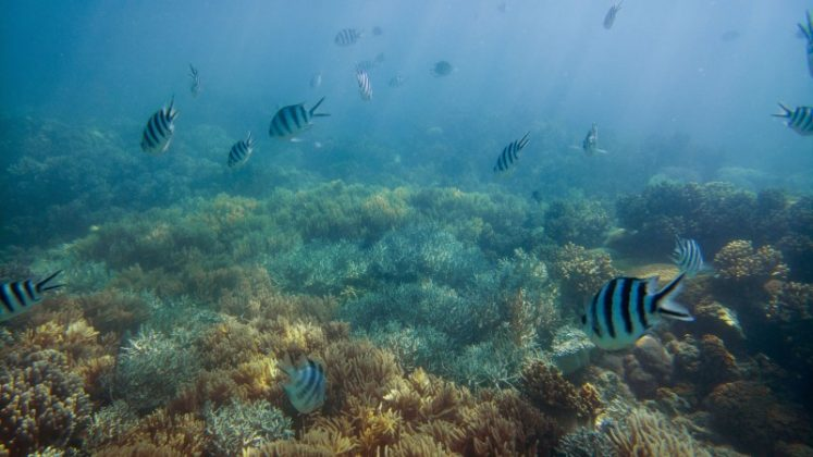 National Geographic Membawa Lumia 950 dan 950 XL Menjelajah The Great Barier Reef