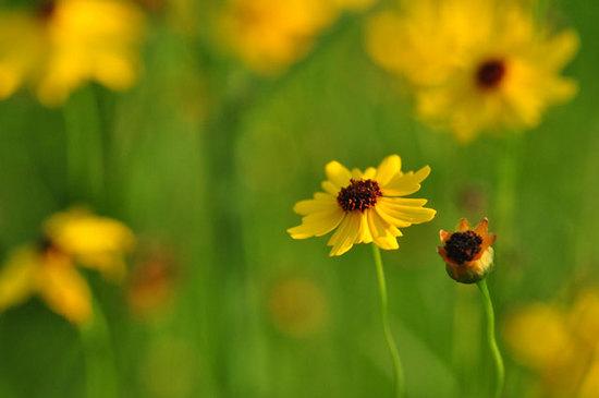Tips Fotografi Lumia: Mengoptimalkan Depth of Field